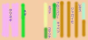 Hatake0804